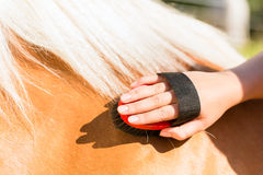 Woman combing pony on stable Stock Photo