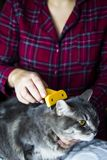Home cat enjoys combing out Royalty Free Stock Photos