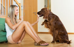 Woman communicating with Irish setter Royalty Free Stock Photography