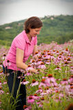 Woman in coneflower field Royalty Free Stock Images