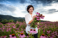Woman in coneflower field Royalty Free Stock Photo