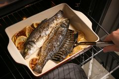 Woman cooking fish. In oven Royalty Free Stock Photography