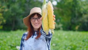 Woman with corn in a basket, on a farm or in a vegetable garden. The concept of harvesting or selling vegetables. Woman with corn in a basket, on a farm or in a stock footage