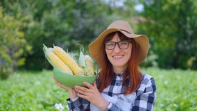 Woman with corn in a basket, on a farm or in a vegetable garden. The concept of harvesting or selling vegetables. Woman with corn in a basket, on a farm or in a stock video