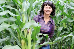 Woman in corn. Field in aun royalty free stock image