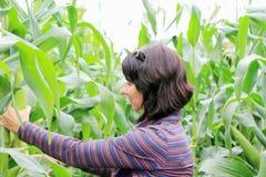 Woman in corn. Field in aun royalty free stock photo