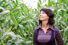 Woman in corn. Field in aun stock photos