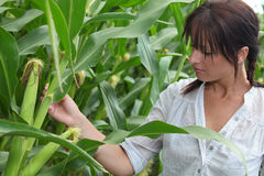 Woman in corn field Stock Photo
