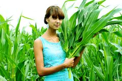 Woman corn Stock Images