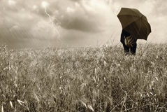 Woman into a cornfield. Under the rain Stock Images