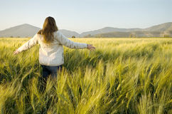 Woman in a cornfield Royalty Free Stock Images