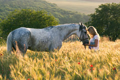 Woman in cornfield with horse Royalty Free Stock Images