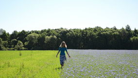 Woman cornflower field Stock Image