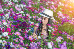 Woman and cosmos flowers. Stock Images