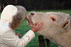 Woman  and cow Stock Photos