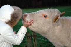 Woman  and cow Royalty Free Stock Photography