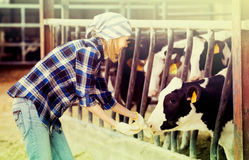 Woman with cows at farm Stock Photo