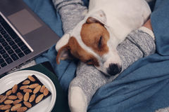 Woman in cozy home wear relaxing at home with sleeping dog Jack Russel terrier, using laptop. Soft, comfy lifestyle. Royalty Free Stock Photography