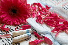 Woman critical days, Menstruation calendar, flower. Sanitary pads, calendar, towel and pink Gerber on light background stock photo