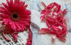 Woman critical days, Menstruation calendar, flower. Sanitary pads, calendar, towel and pink Gerber on light background stock photography