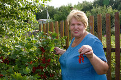 Woman with crop of red currant in garden Royalty Free Stock Photography