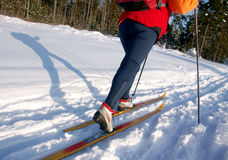 Woman cross country skier in forest on a sunny day Royalty Free Stock Photos