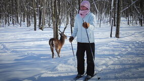 Woman Cross-Country Skiing With Deer