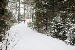 A woman cross country skiing in the forest royalty free stock photo