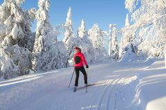 Woman cross country skiing in Lapland Finland. On sunny cold day Royalty Free Stock Photos