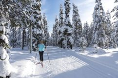 Woman cross country skiing in Lapland Finland Stock Photography