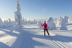 Woman cross country skiing in Lapland Finland. On sunny cold day Royalty Free Stock Photography
