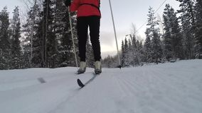 Woman cross-country skiing in the snowy forest stock footage