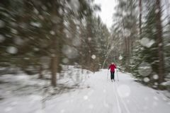 A woman cross country skiing in snowy forest. stock image