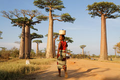 Woman crosses the alley of Baobab Royalty Free Stock Image