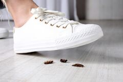 Woman crushing cockroaches with feet. Pest control