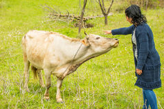 Woman cuddling a cow Royalty Free Stock Images