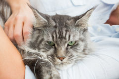 Woman cuddling with pet cat on sofa Stock Images