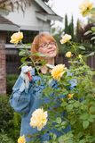 Woman cut roses in garden. Woman is having good time with her hobby by cutting roses in her garden Royalty Free Stock Photo