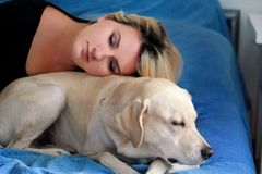 Woman with cute dogs at home. Handsome girl resting and sleeping with her dog in bed in bedroom. Owner and dog sleeping in sofa. Yellow labrador retriever stock photography