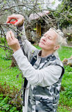 Woman cuts a branch at an Apple-tree in the garden Royalty Free Stock Image