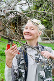 Woman cuts a branch at an Apple-tree in the garden Stock Images