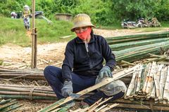 Woman cutting bamboos Royalty Free Stock Photography