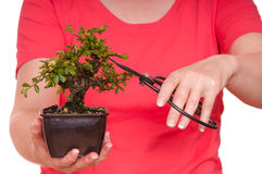 Woman is cutting a bonsai tree Royalty Free Stock Images