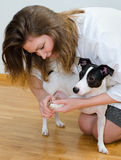 Woman cutting dog claws Royalty Free Stock Photos