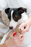 Woman cutting dog claws Stock Images
