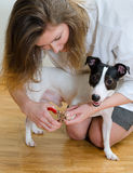 Woman cutting dog claws Stock Image