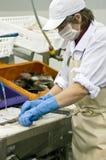 Woman cutting fish fillets