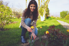 Woman cutting the flowers in the garden Stock Photos