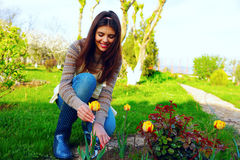 Woman cutting the flowers Stock Photography