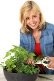 Woman cutting fresh herbs. Stock Photos